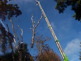Sectional Felling: The tree is dsimantled into pieces and carefully lowered to the ground