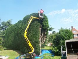 Tall Hedge Maintenance